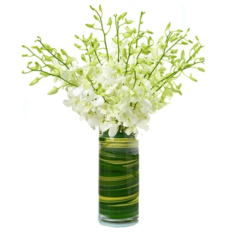 send 12 white orchids to japan